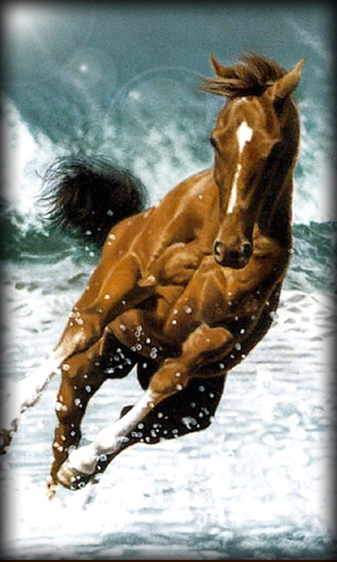 Running Horse Live Wallpaper