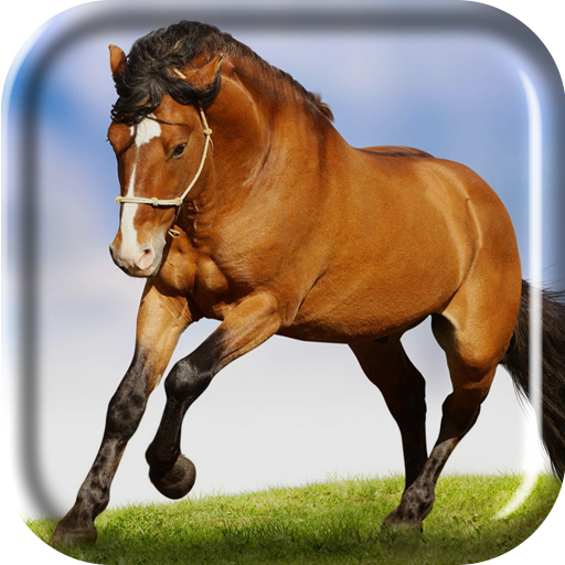 download running horse live wallpaper gallery