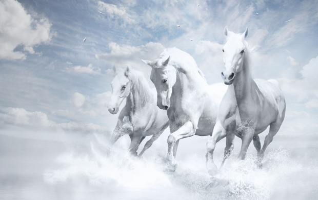 Running Horse Wallpapers