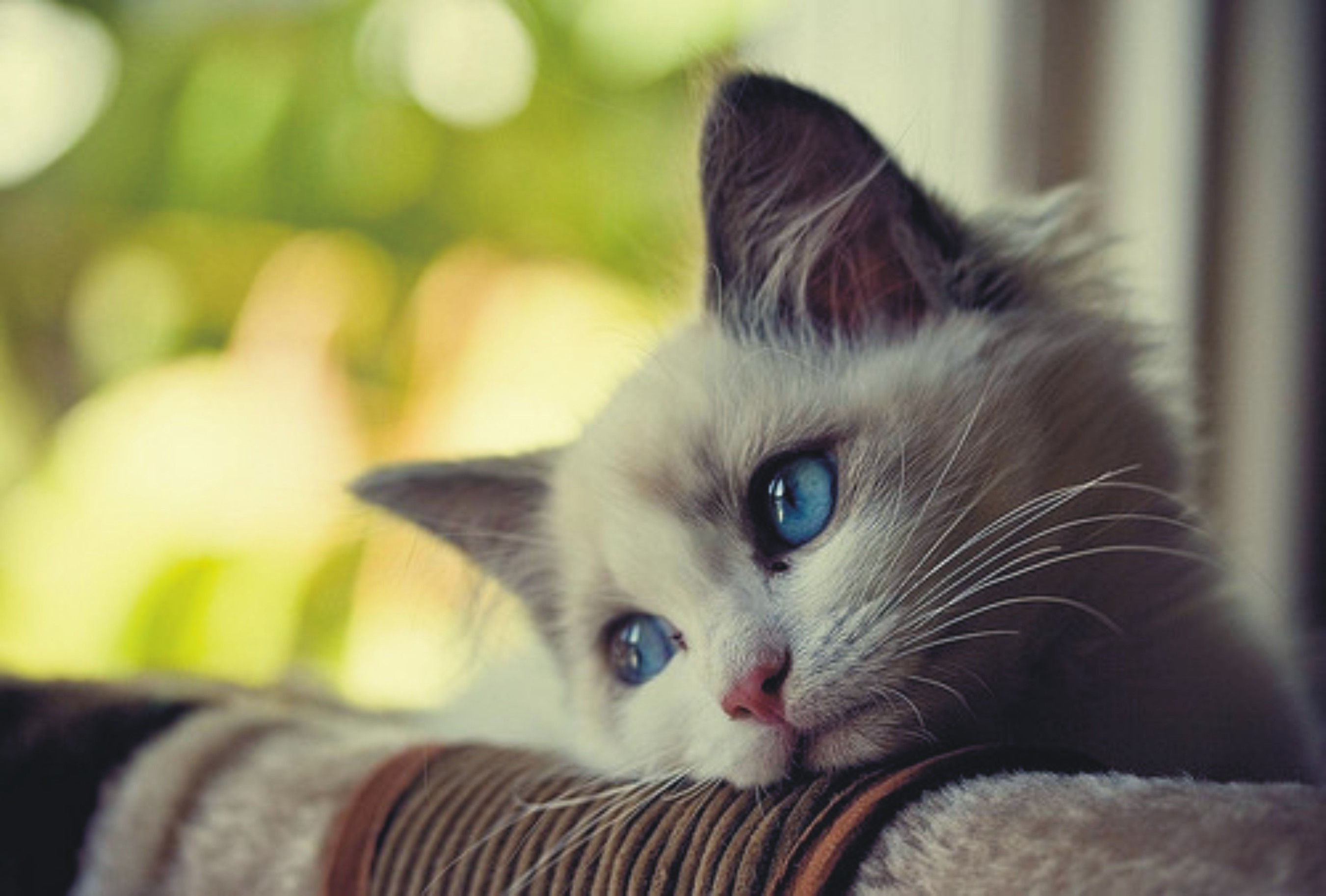 Sad Cat Wallpaper
