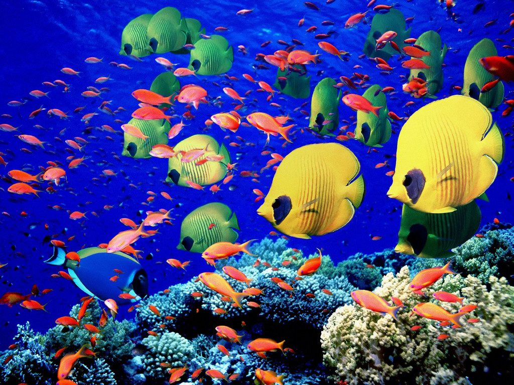 Saltwater Fish Wallpaper
