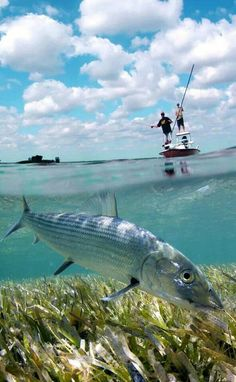 Download Saltwater Fishing Wallpaper Gallery