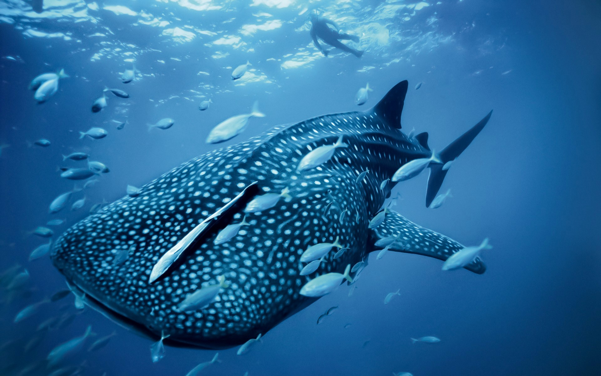 Sea Animals Wallpapers
