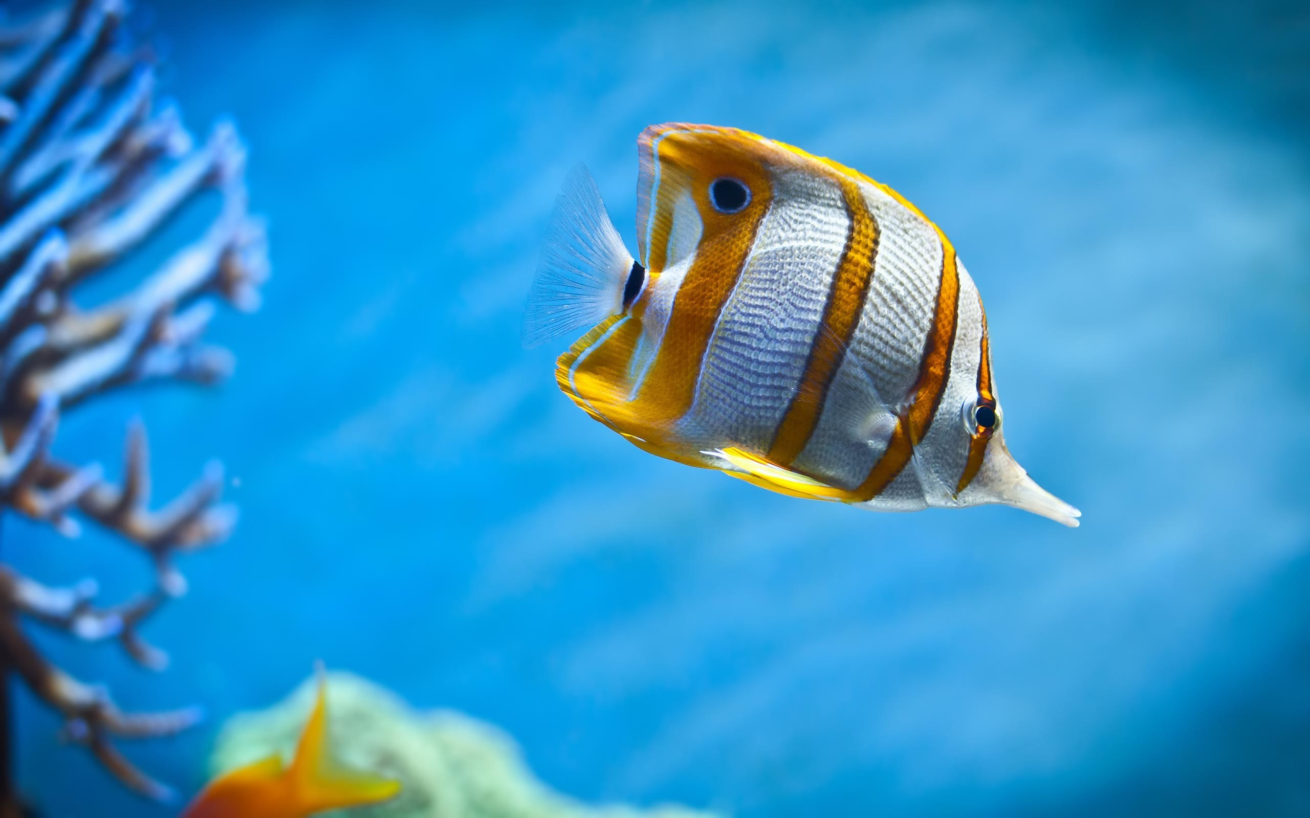 Sea Fish Wallpaper HD