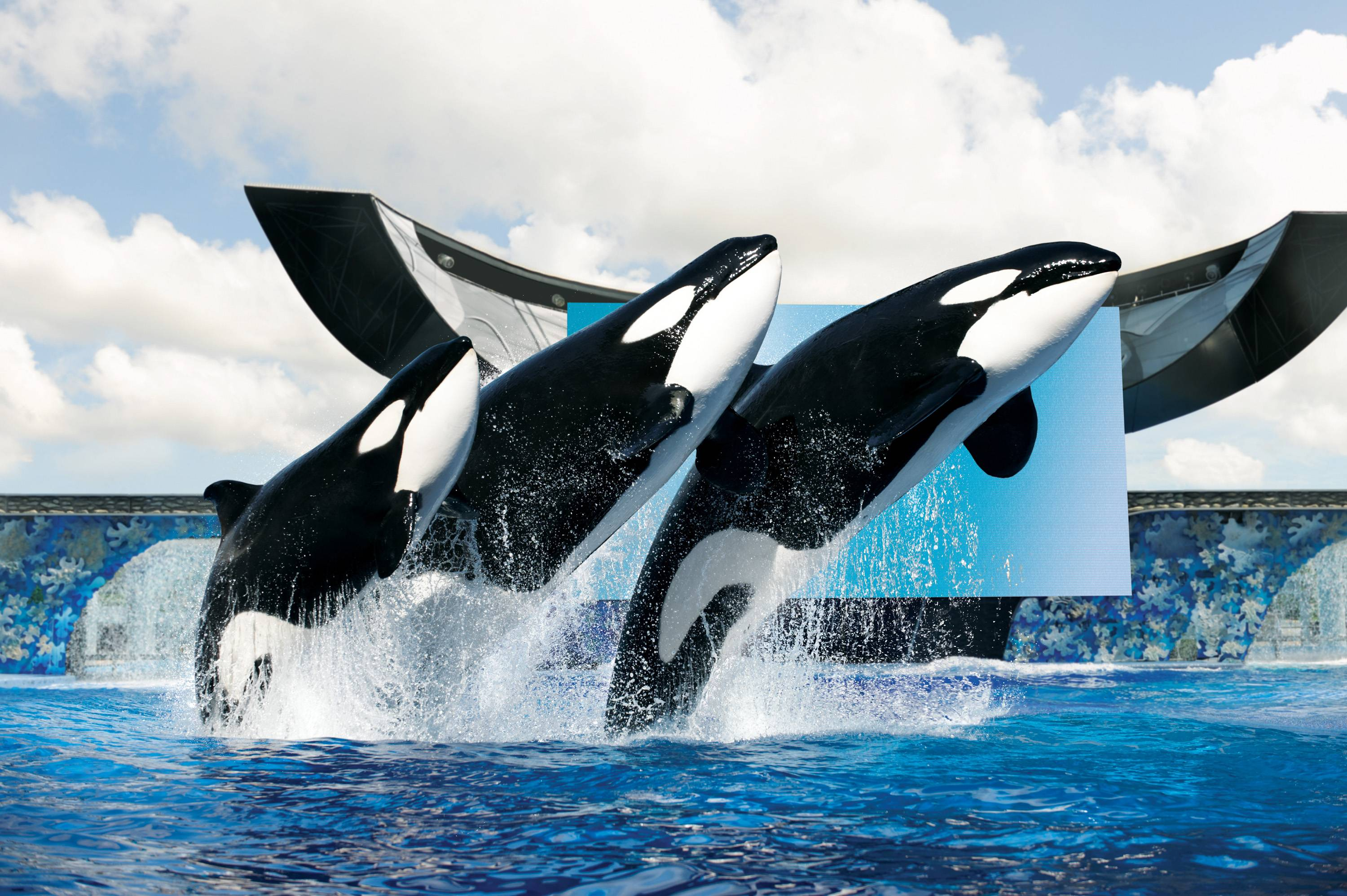 Sea World Wallpaper