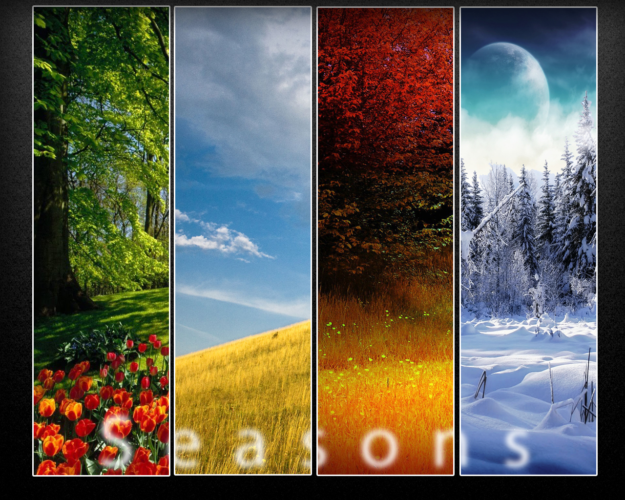 Seasons Wallpaper