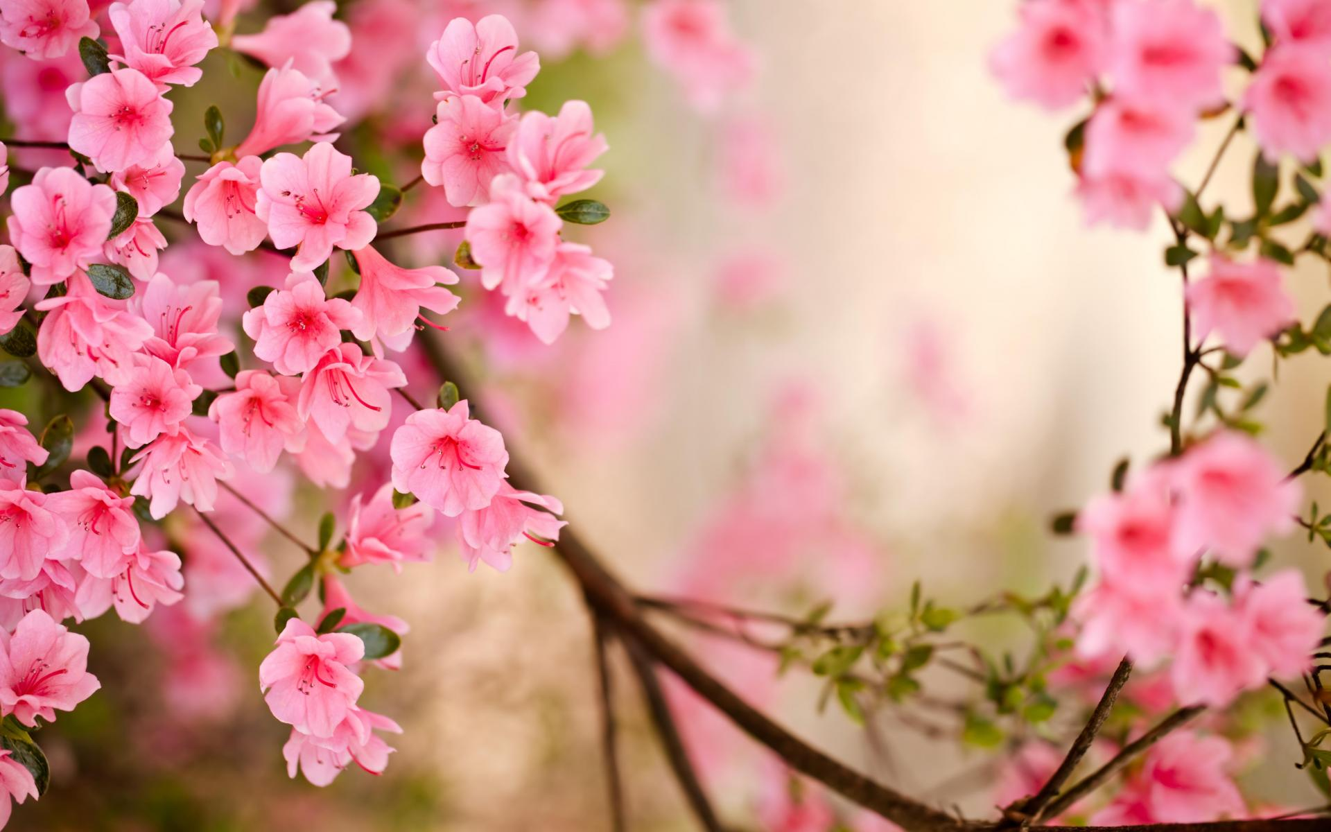 Show Flowers Wallpapers