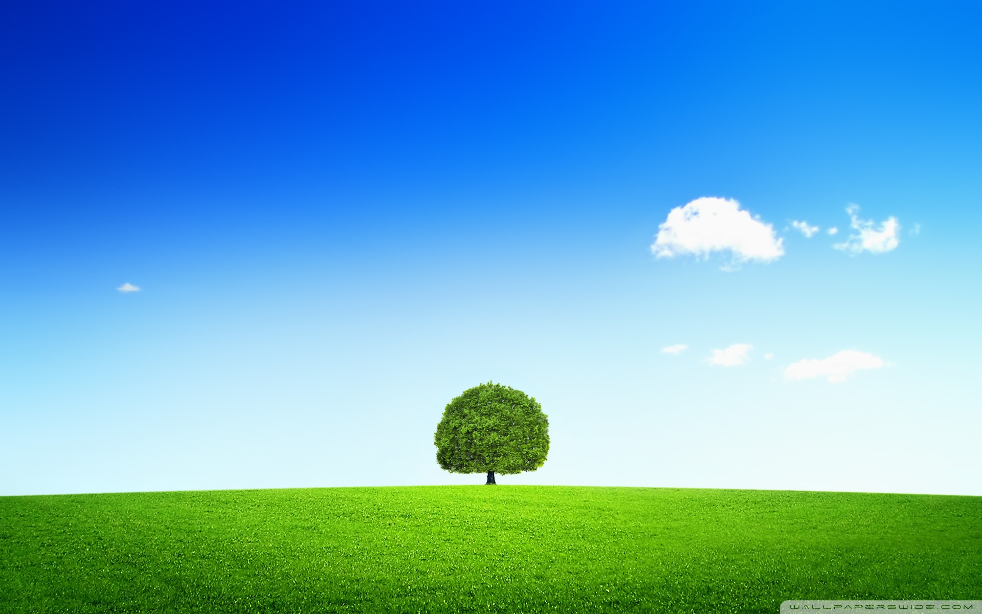 Single Tree Wallpaper