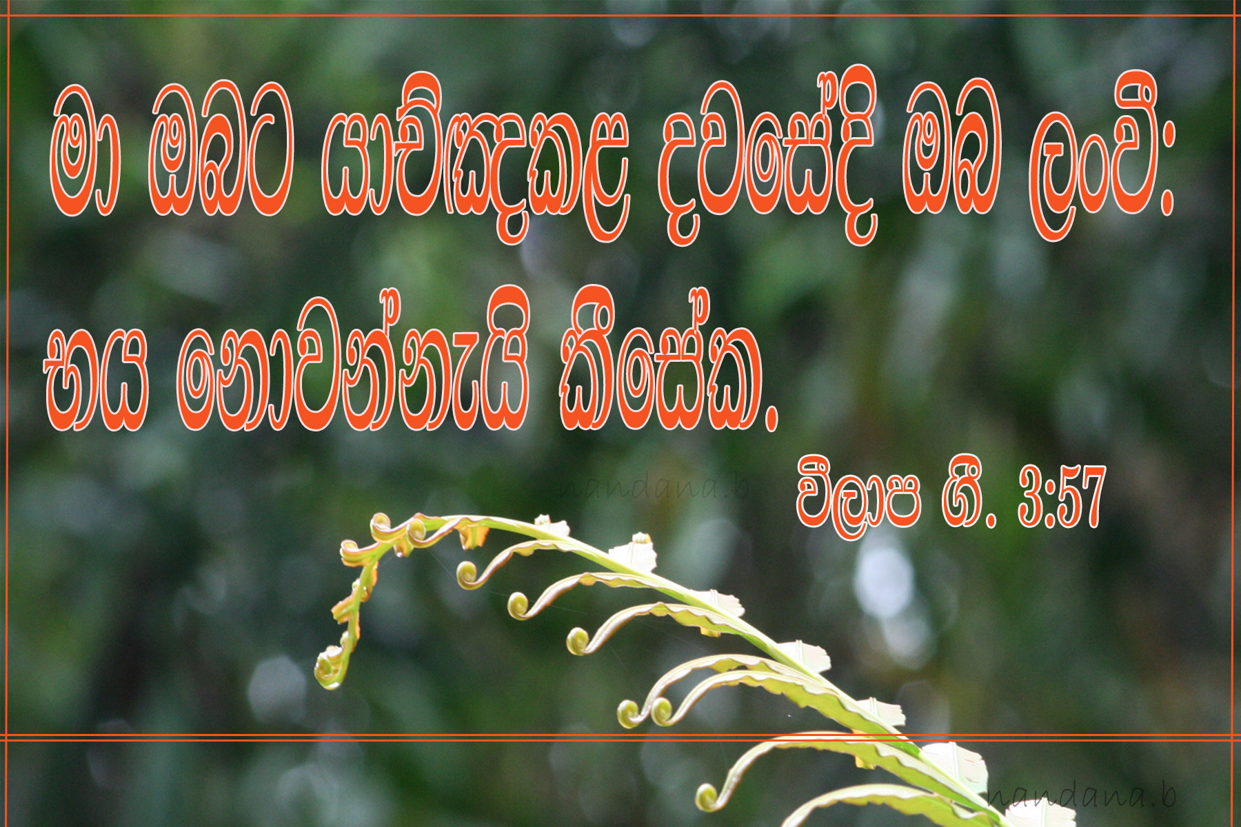 Sinhala Bible Words Wallpaper