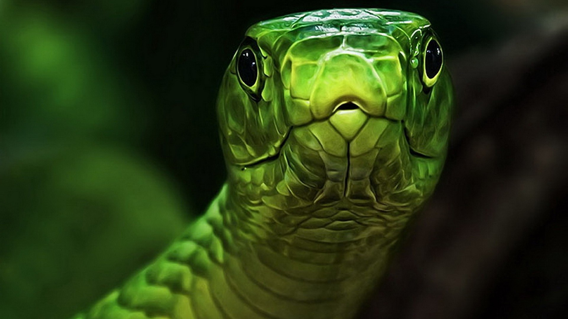 Snake Full HD Wallpaper