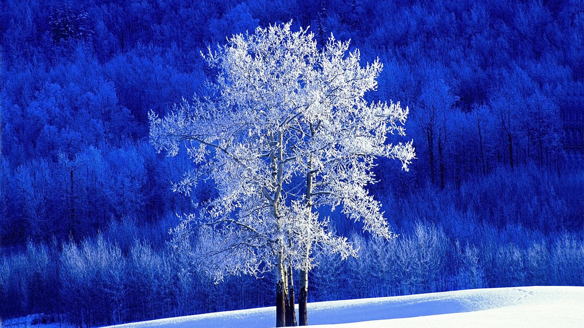 Snow Tree Wallpaper