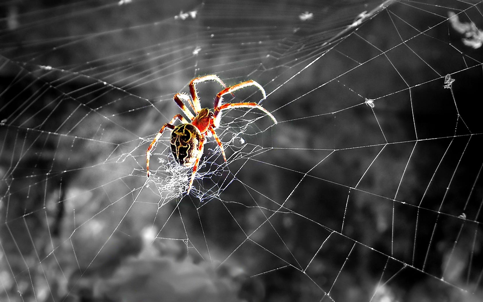 Spiders Wallpapers