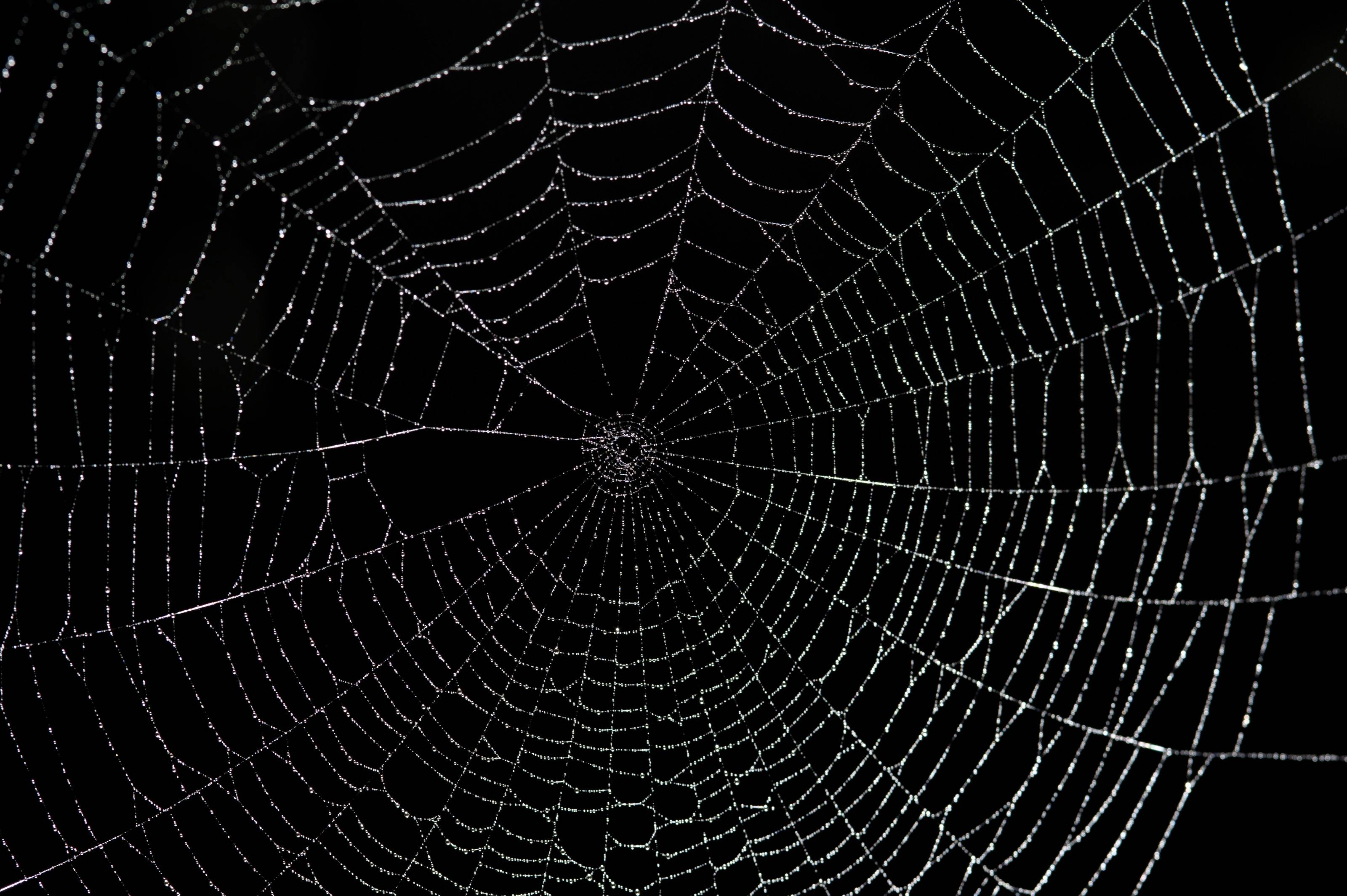 Spiderweb Wallpaper