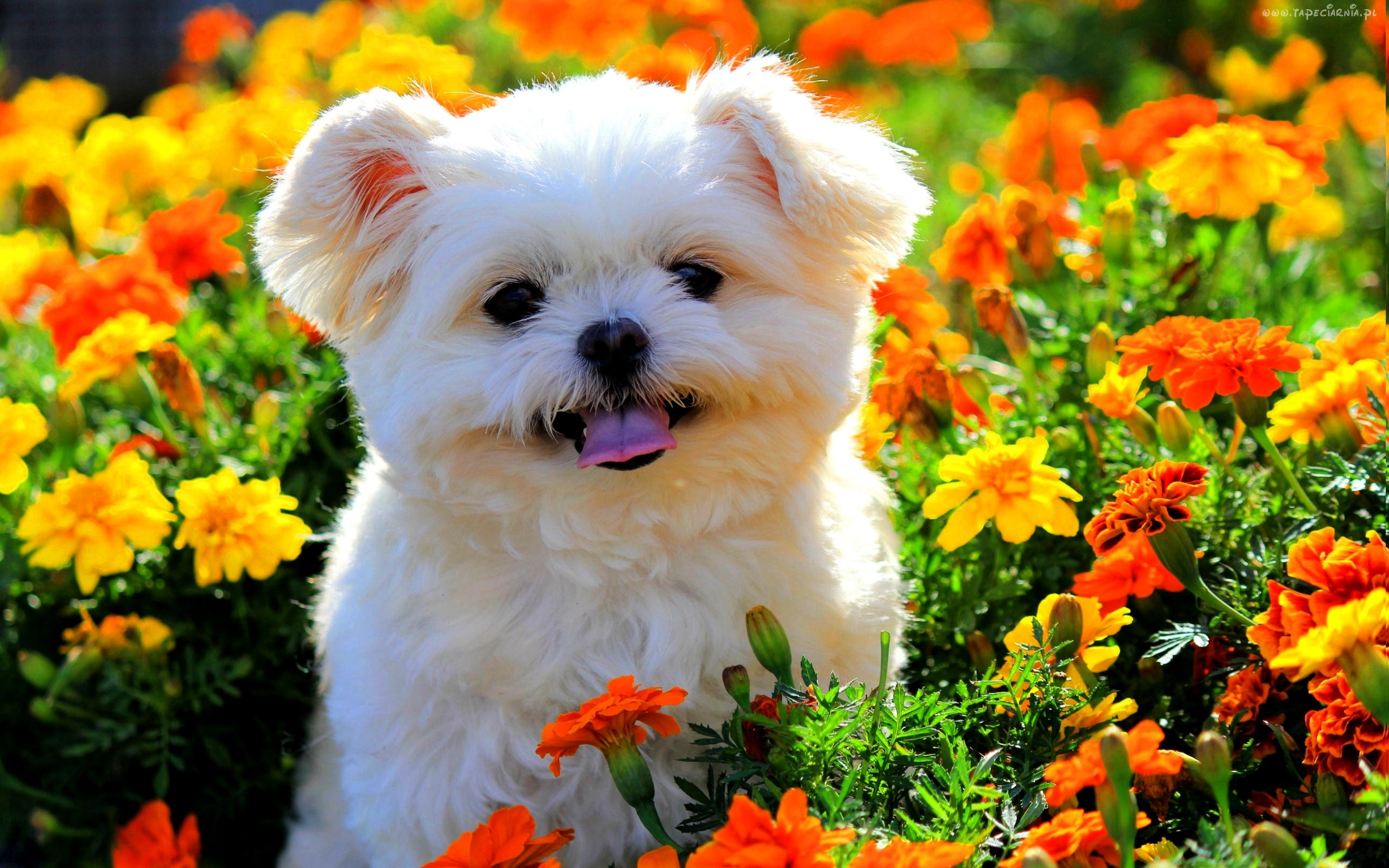 photo collection spring animals wallpaper