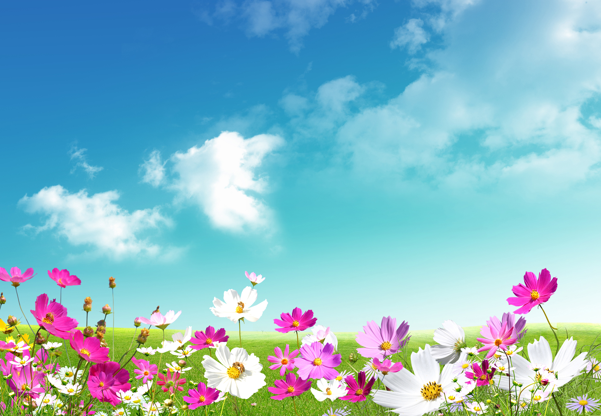 Spring Free Wallpapers