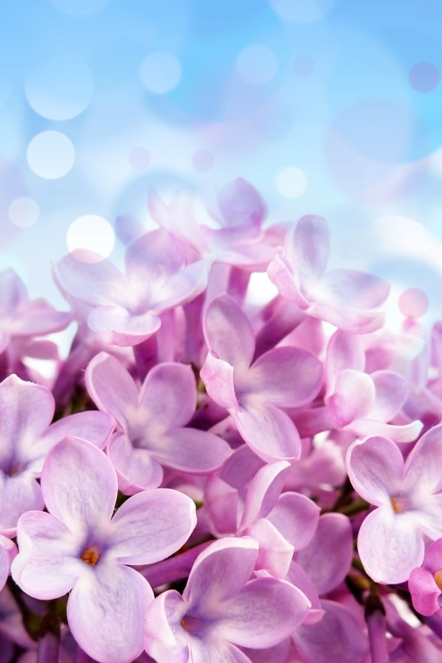 Download Spring Wallpaper Iphone Gallery