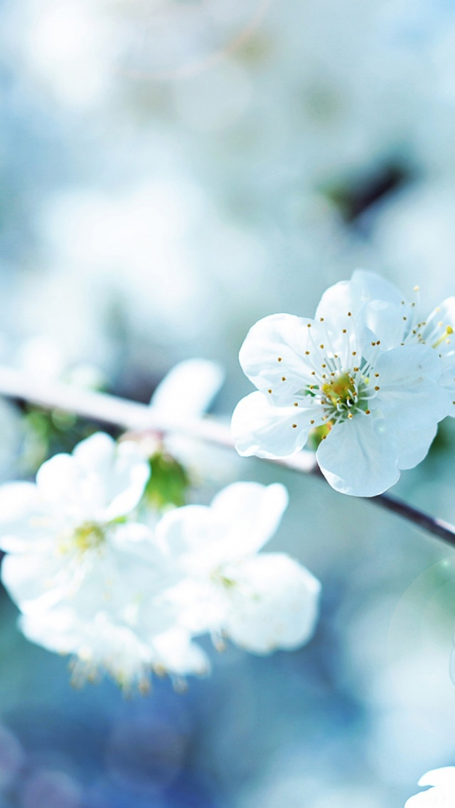 Download Spring Wallpaper Phone Gallery
