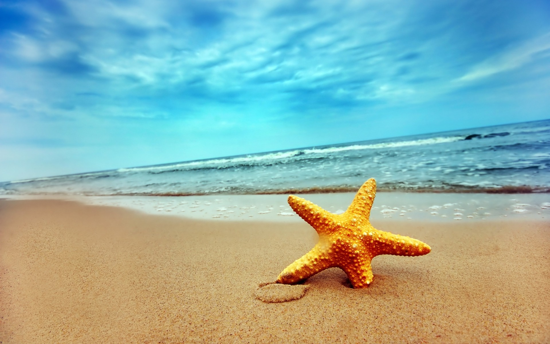 Download Starfish Wallpaper Gallery