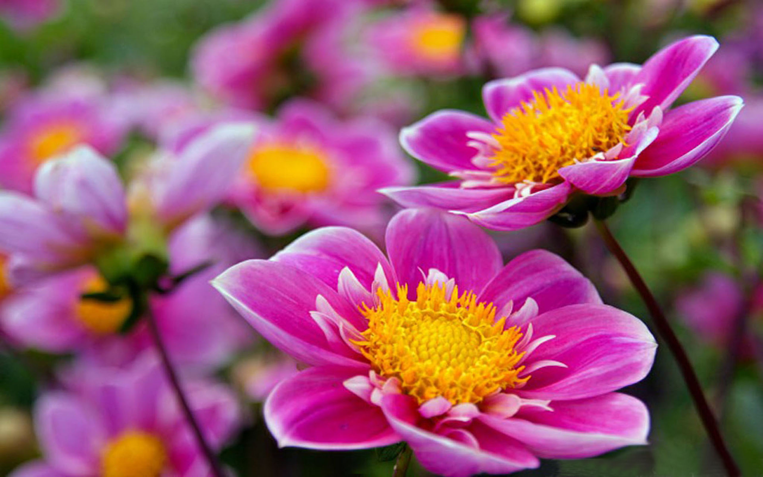 Super Flowers Wallpapers
