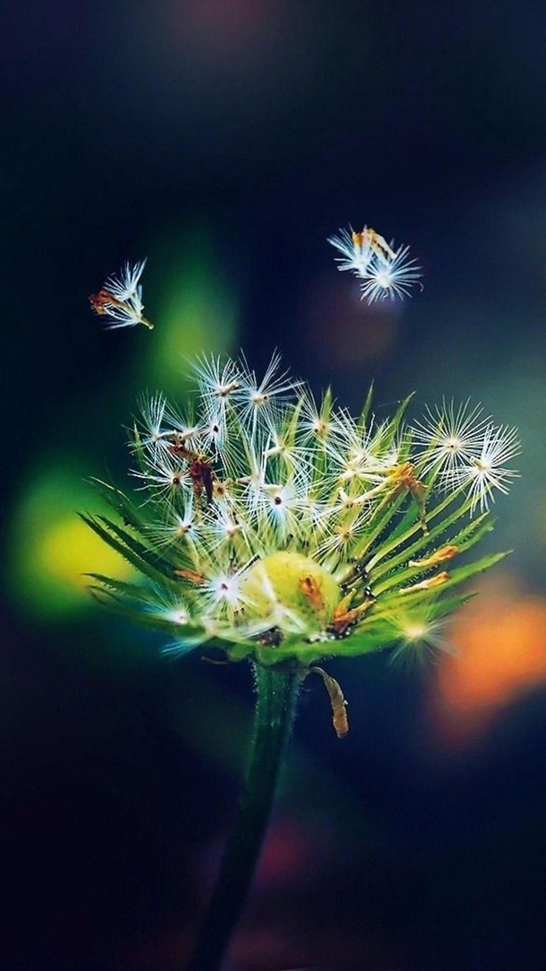 Super HD Wallpapers For Galaxy S4