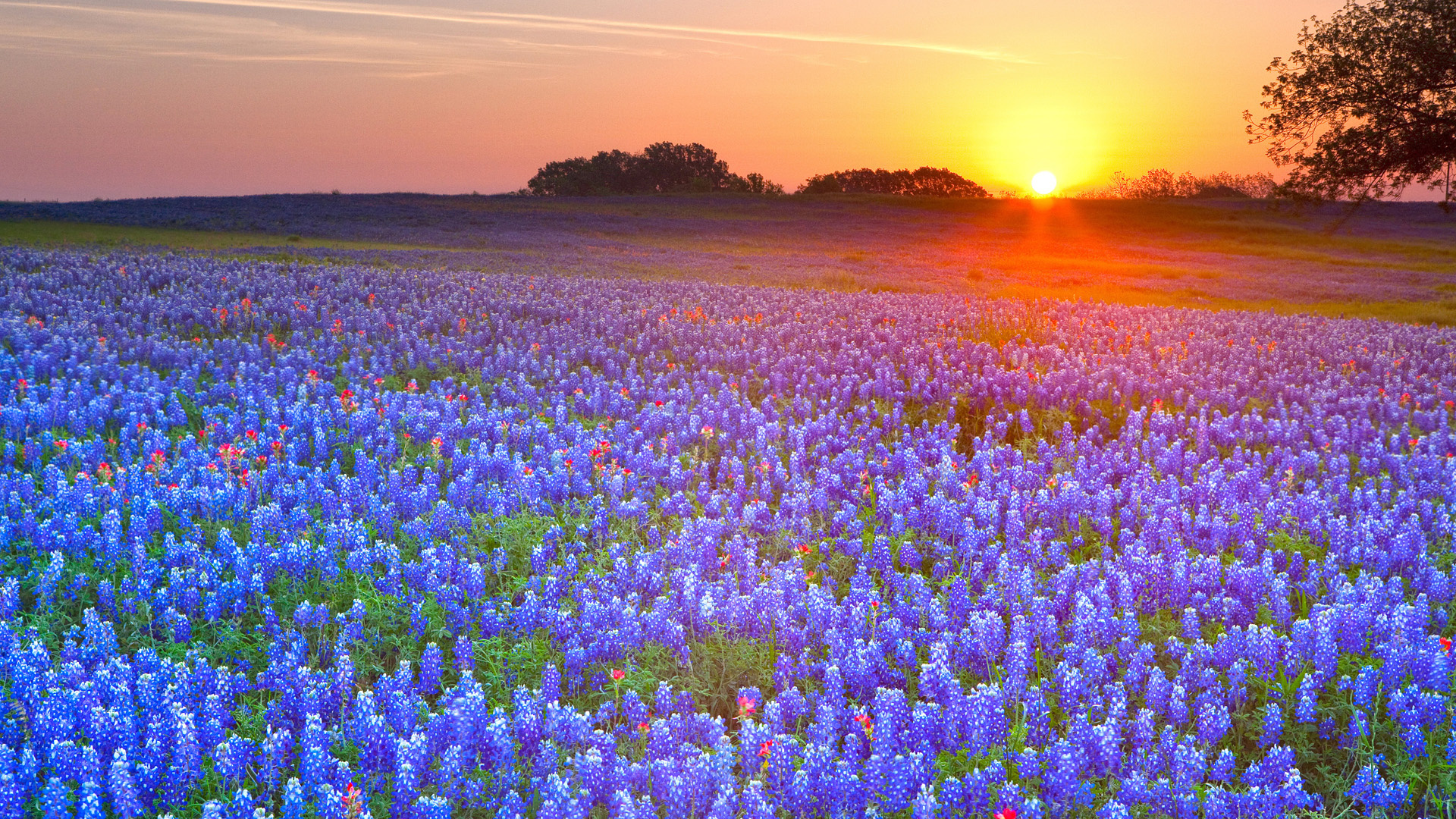 Texas Scenery Wallpaper