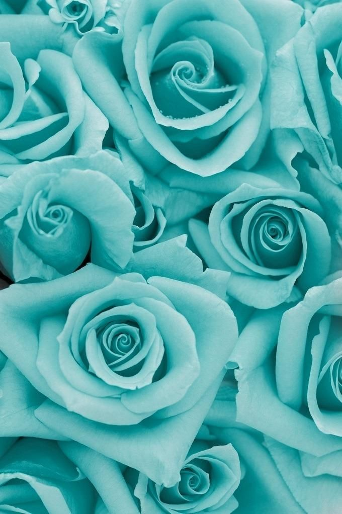 Tiffany Blue Wallpaper