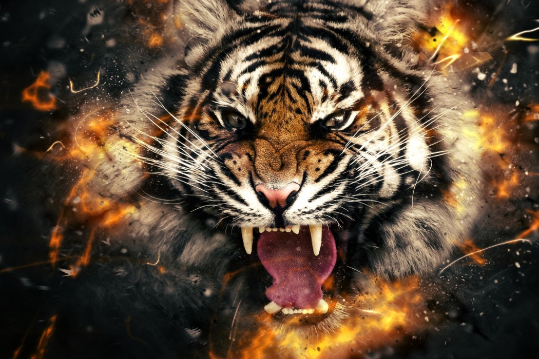 Awesome tiger wallpapers