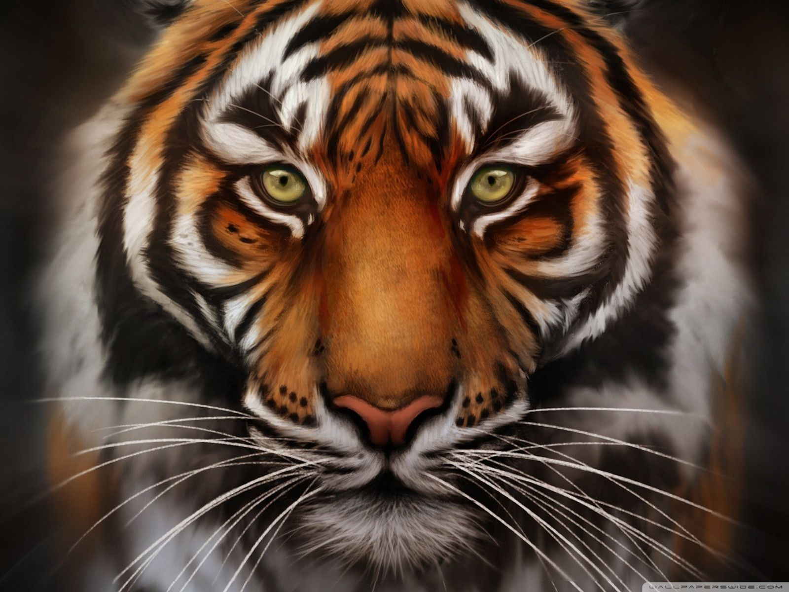 Tiger Face HD Wallpaper