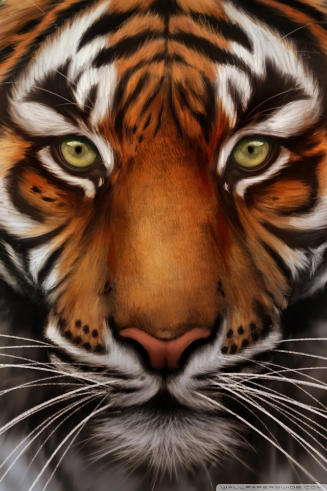Download Tiger Wallpaper Iphone Gallery