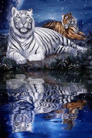 Tigers Live Wallpaper