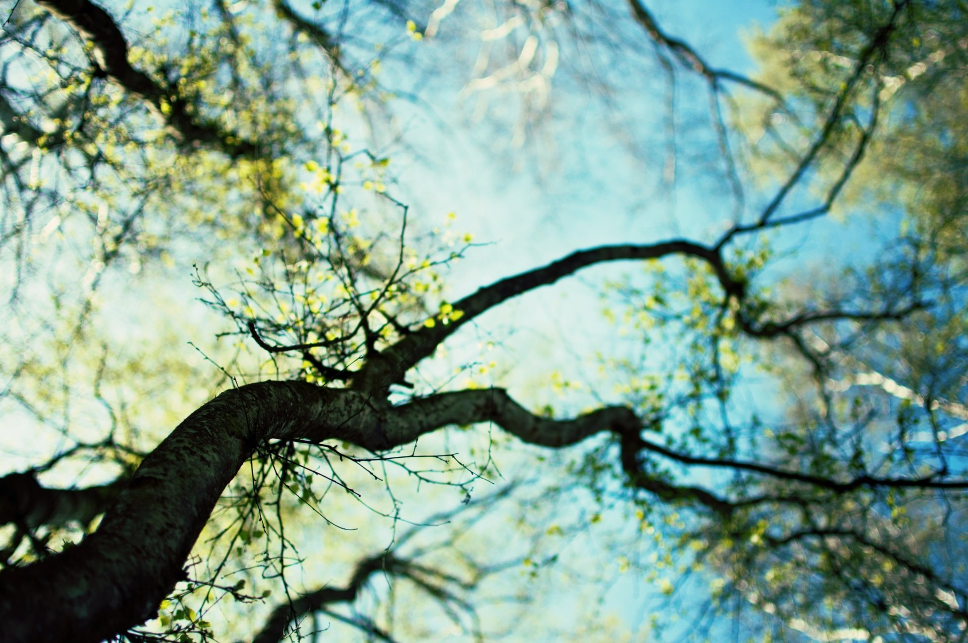 Tree Branches Wallpaper
