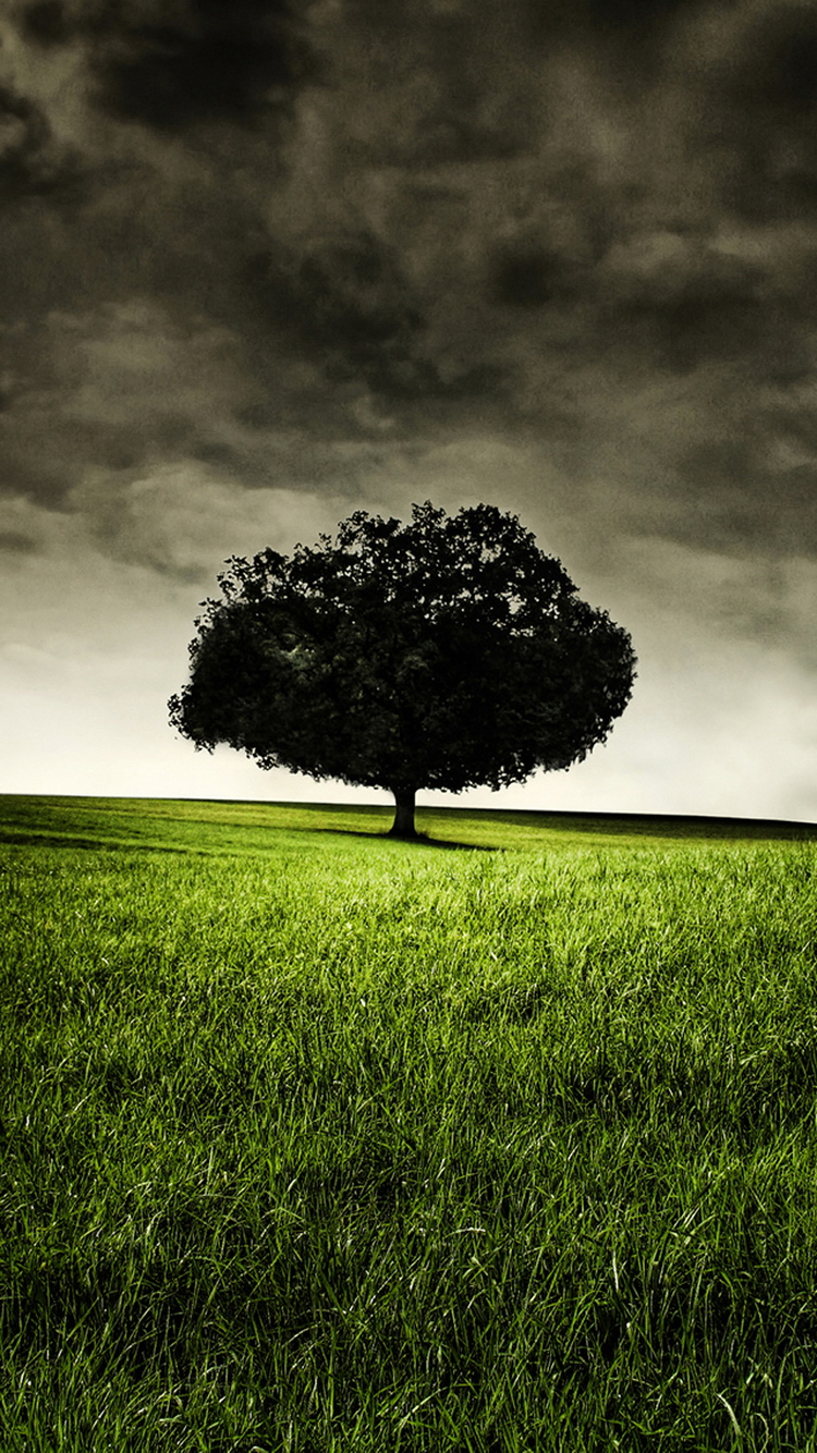 Tree Wallpaper For Iphone
