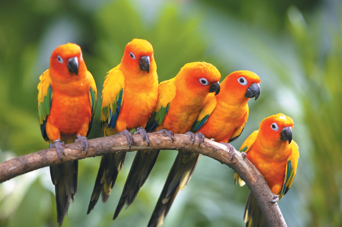 Tropical Birds Wallpaper