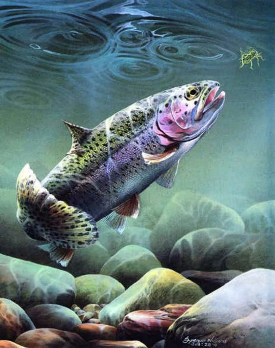 Download trout wallpaper gallery trout wallpaper voltagebd Image collections