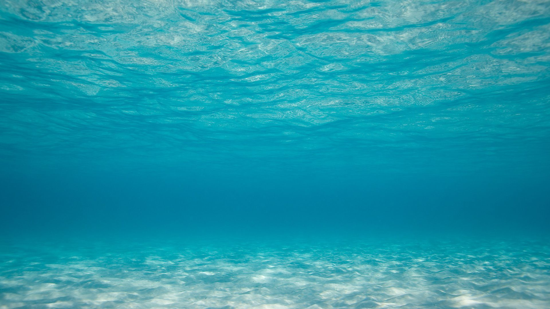 Under The Ocean Wallpaper