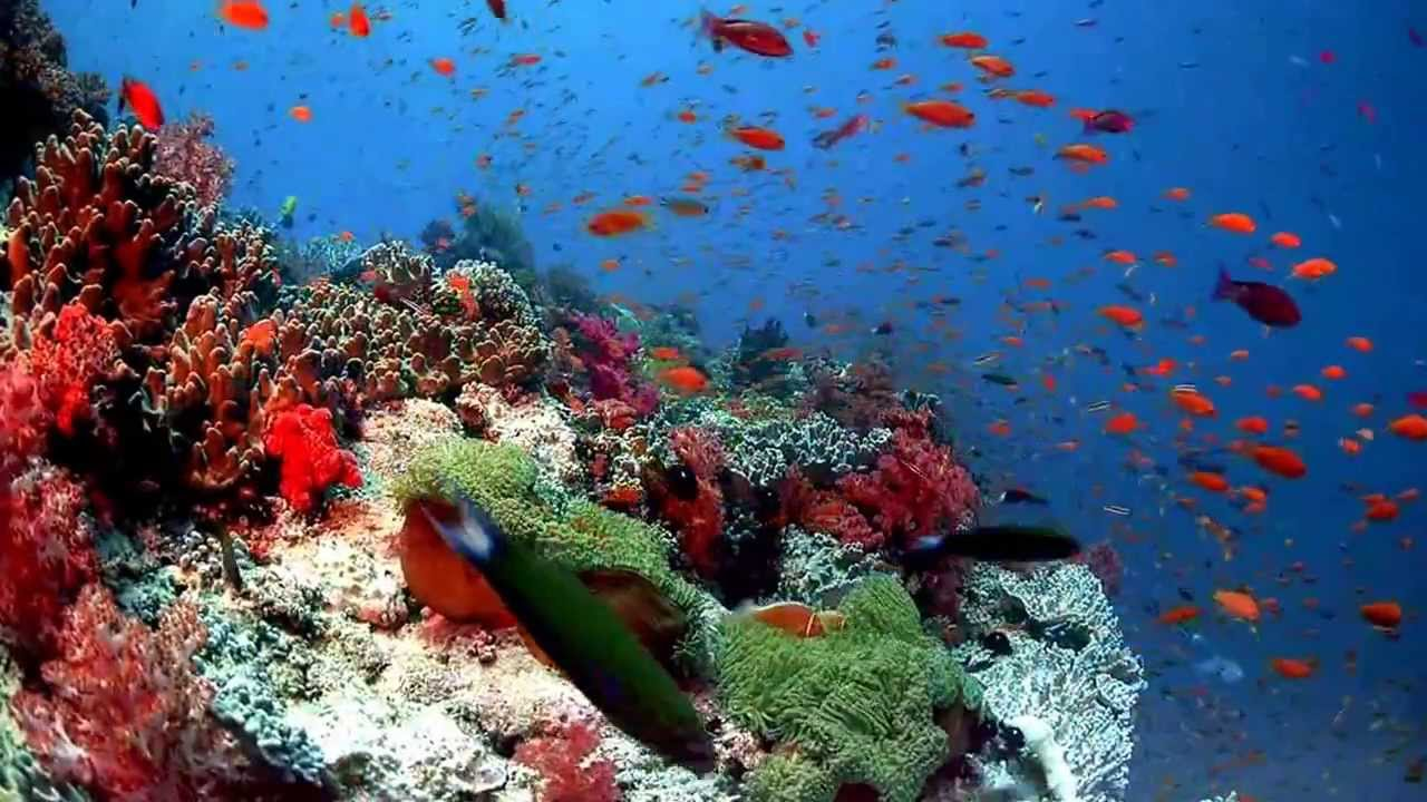 Download underwater live wallpaper for pc gallery - Underwater wallpaper for pc ...