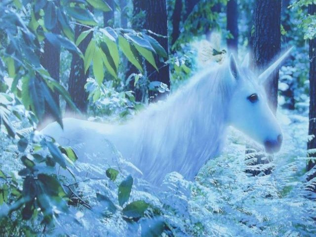 Download Unicorn Wallpapers Free Download Gallery