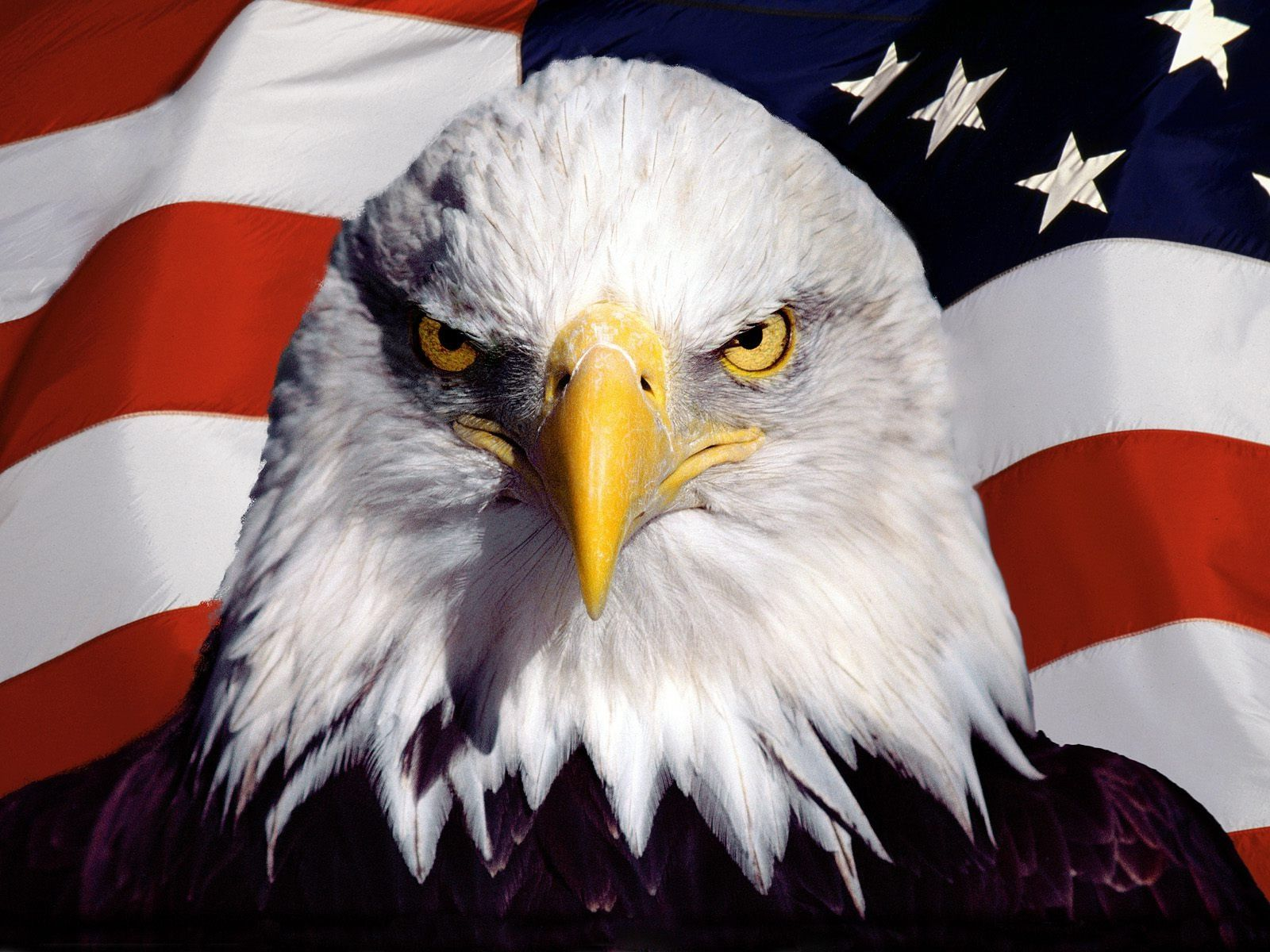 Usa Eagle Wallpaper