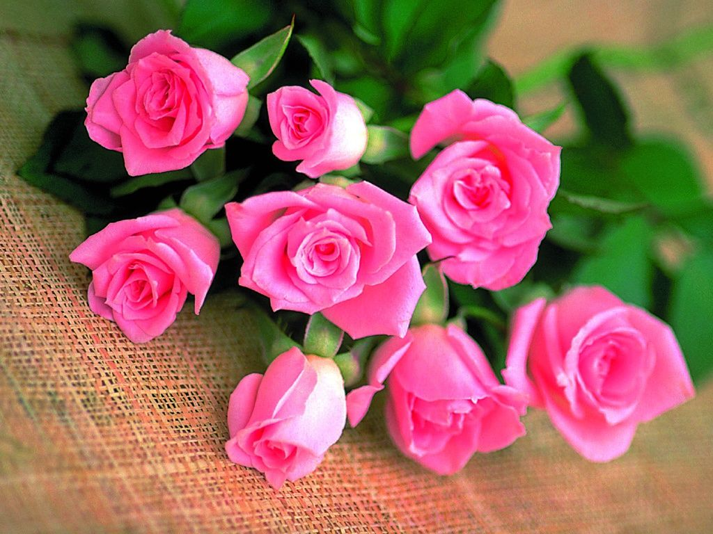 WWW Beautiful Roses Wallpapers Com