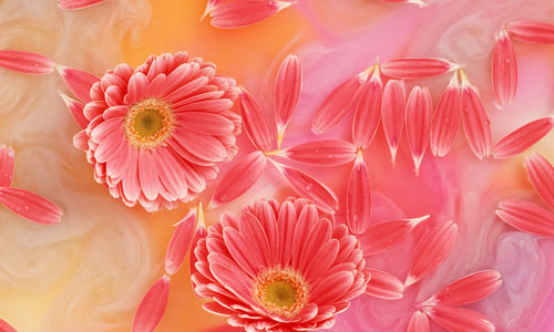 WWW Flower Wallpaper Download