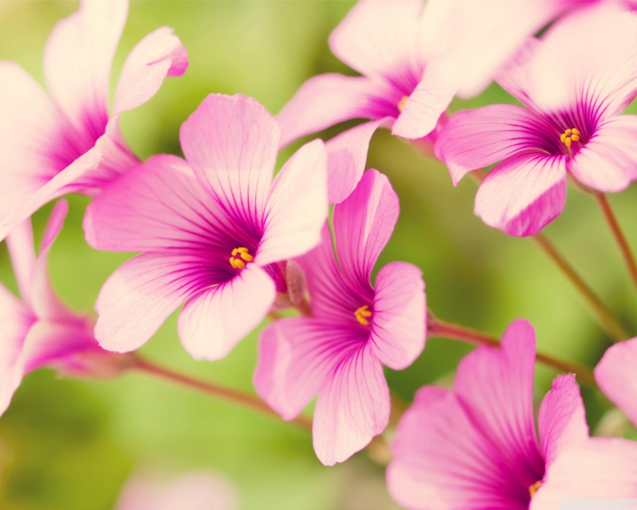 WWW Flower Wallpapers Free Download Com