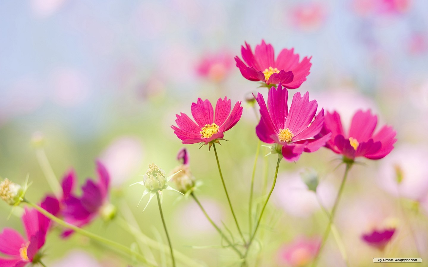 WWW Free Flower Wallpaper Com