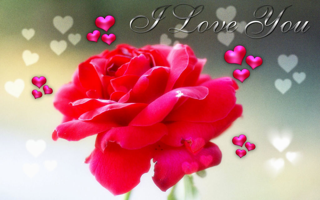 WWW L Love You Wallpaper Com