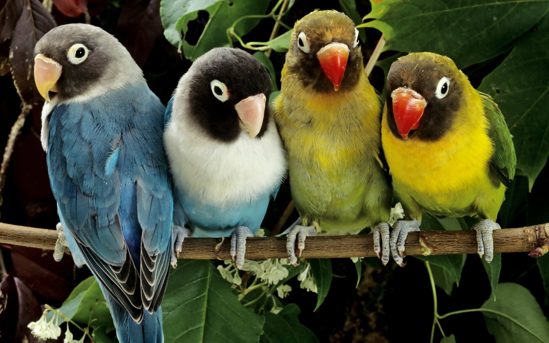 Love Birds Wallpaper Free Download For Pc: Download Light Green Floral Wallpaper Gallery