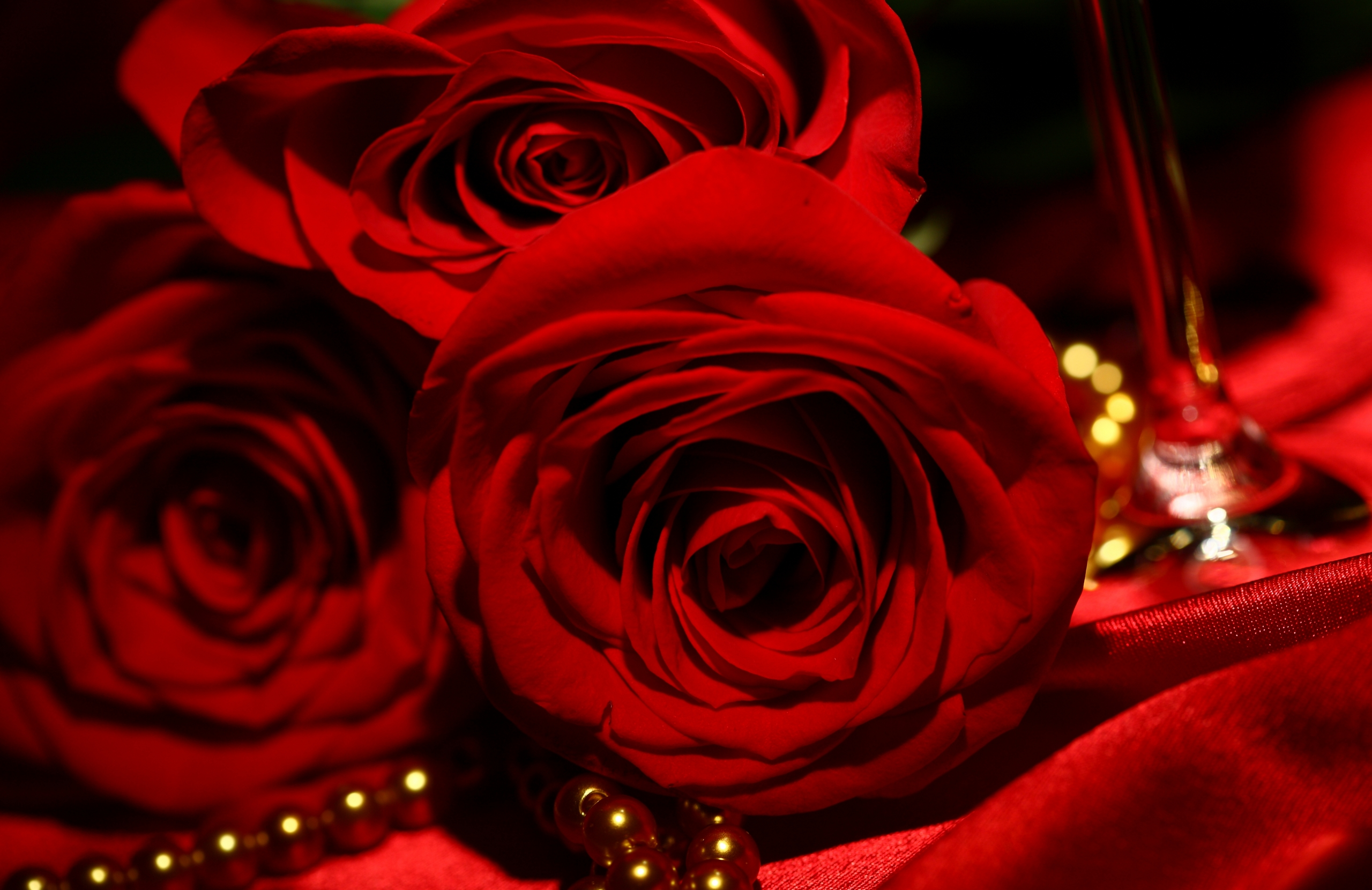 WWW Red Roses Wallpaper Com