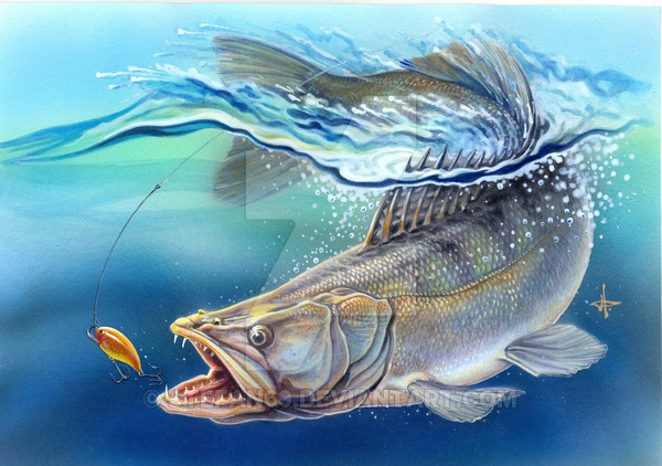 download walleye wallpaper gallery