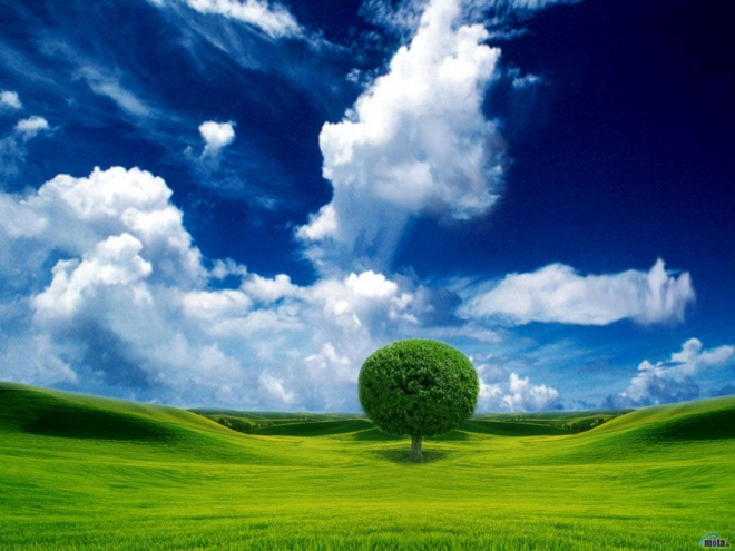 Wallpaper About Nature