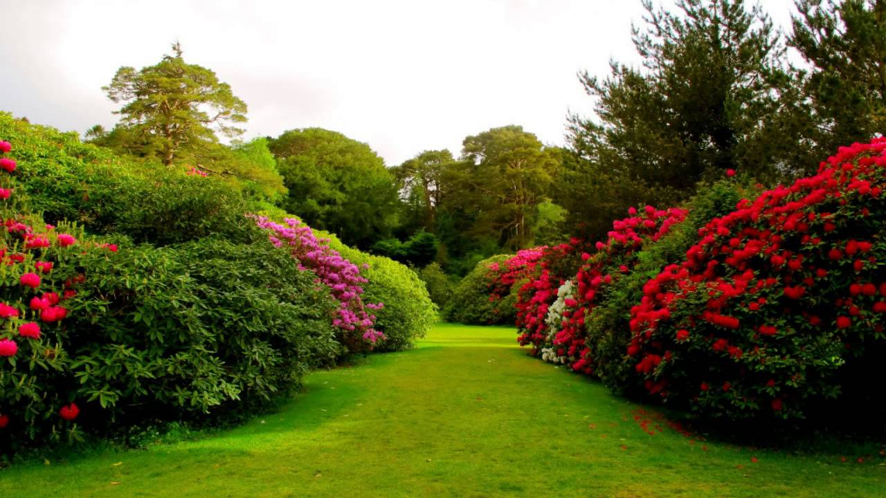 Wallpaper Beautiful Flower Garden