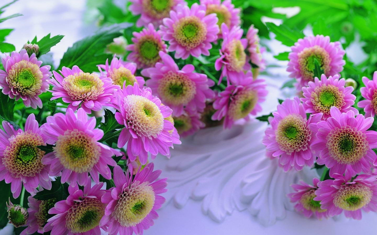 Wallpaper Beautiful Flowers Free Download