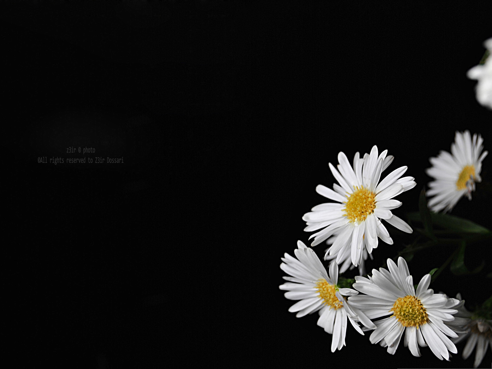 Wallpaper Black Background Flowers